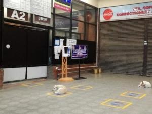 がらがらの国際空港。野良犬がソーシャルディスタンス休憩